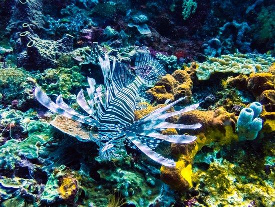 Sanctum Dive Nusa Penida: Lionfish