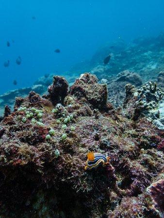 Sanctum Dive Nusa Penida: Amazing corals and macro life