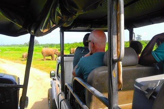 Udawalawe National Park Safari Tour