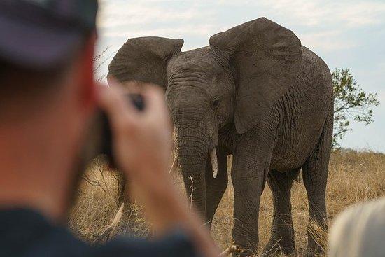 Kruger Full Day Safari - Hoedspruit