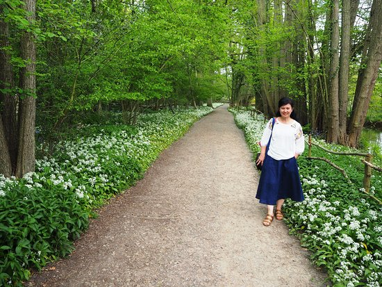 Groombridge Place Gardens: Floral studded forest trail
