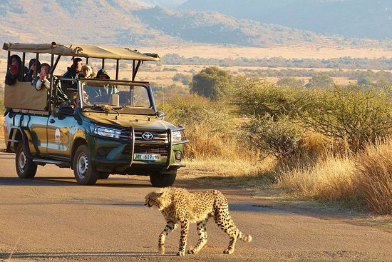 Pilanesberg Safari - Full Day Open...