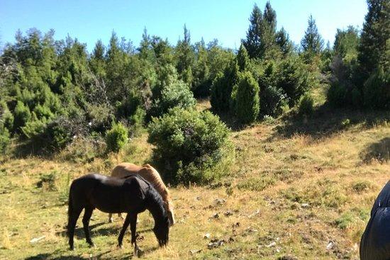 HORSEBACK RIDING in Lolog Lake - Half...