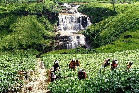 2 Day Trip to Kandy and Nuwara-Eliya
