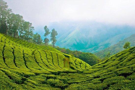 Hills og nuancer: Kerala...