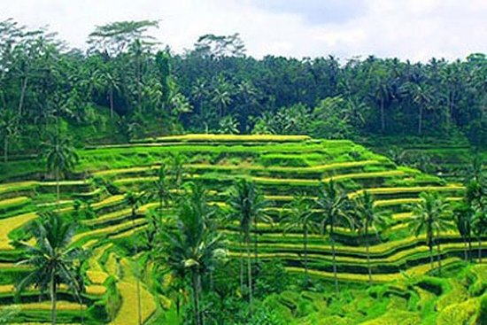 Private Ubud Tour Package Todos os...