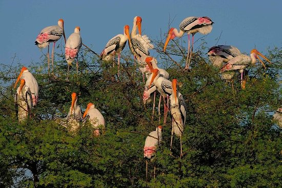 Bird watching a Bharatpur