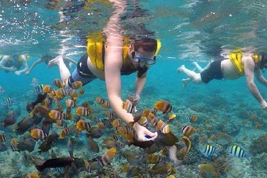 Gili island Snorkeling Half Day Trip...