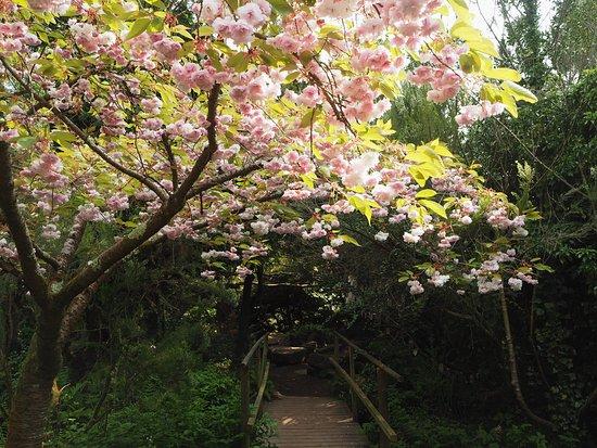 Groombridge Place Gardens: The Secret Garden