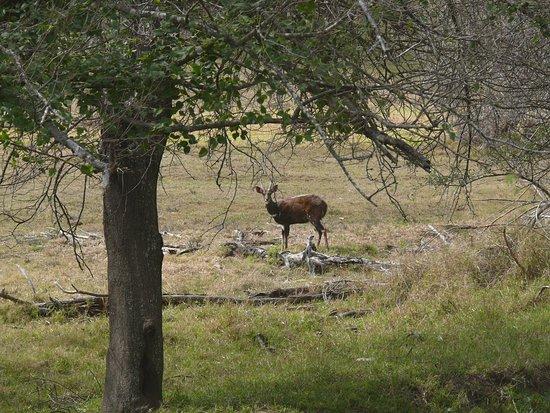 Baviaanskloof Nature Reserve, South Africa: Bushbuck.