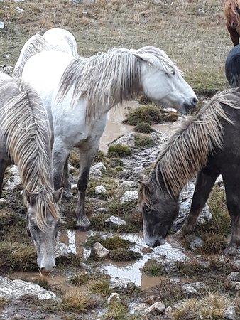 Livno Wild Horses Adventure Tours: Wild Horses in Livno
