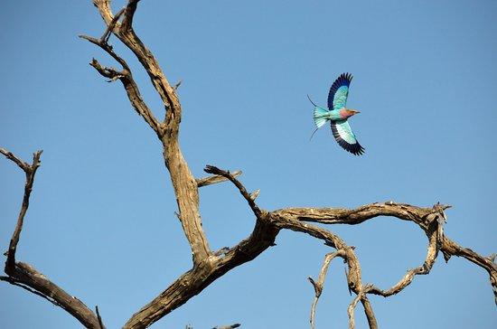 Moremi Game Reserve, Botswana: BIRD WATCHING