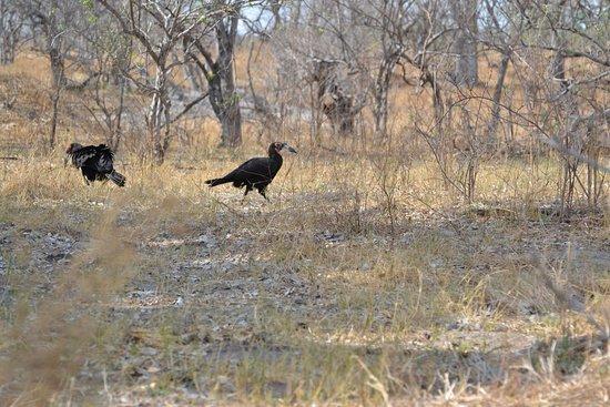 Moremi Game Reserve, Botswana: LOVELY  BIRD