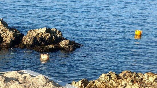 早上看到漁夫在窗外潛水
