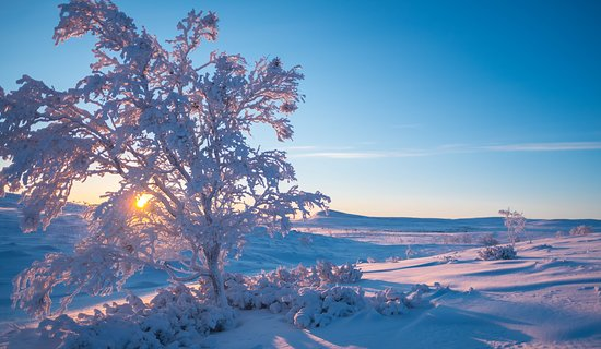 Utsjoki, Suomi: The sun rise after the polar night.