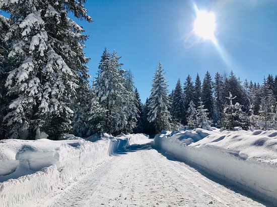 Pension Krinserhof: Snowy Forest during the horse sleigh ride