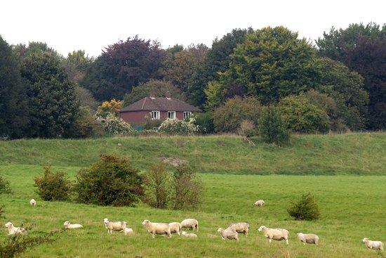Archaeologist-led Stonehenge, Bath and Avebury Small Group tour from London: Durrington Walls