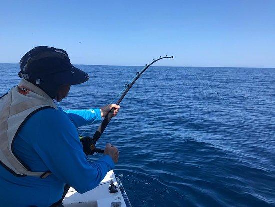Ecuagringo Fishing: Striped marlin fight