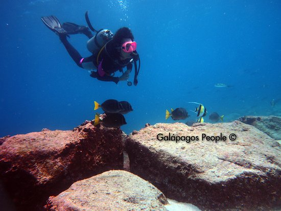Galapagos People Diving