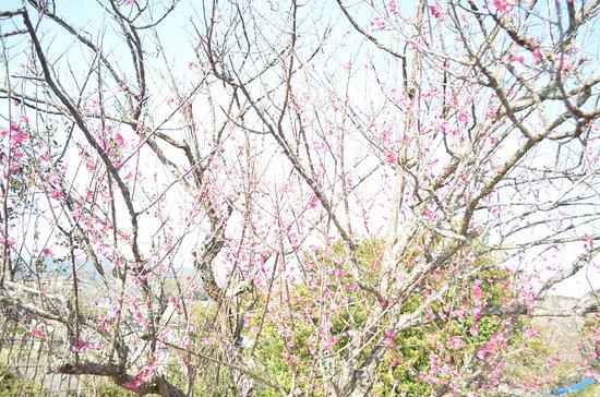 和歌山县照片