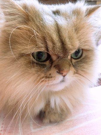 Cat & Rose: ペルシャのにゃんにゃん。