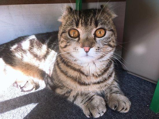 Cat & Rose: アメリカンカールのゴッチくん。