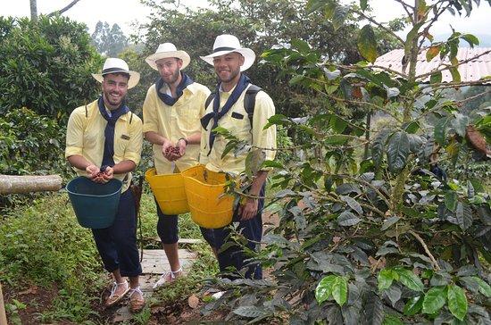 Con Cocora Trek puedes vivir un día de inmersión Salentina, donde trabajaras igual que un caficultor y harás que sea la mejor cosecha de café. en Salento Colombia.