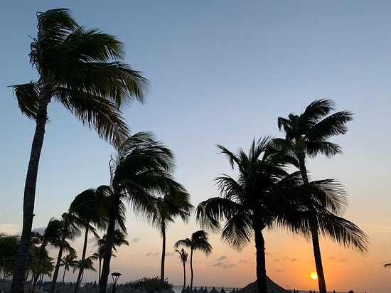 Palm trees at sunset on Palm Beach