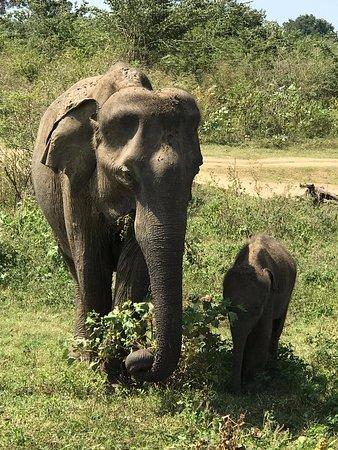 Go Yala Safari Tours: Safari Tour