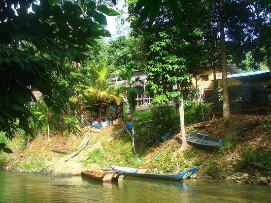 Kalimantan, Indonesia: Borneo jungle, Indonesia