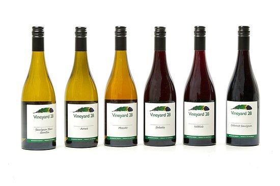 Vineyard 28