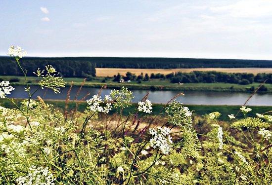 Lipetsk Oblast, Rusija: Река Дон, Липецкая область.  Одно из лучших мест по области, да и в городе. К моему сожалению, сам Липецк не оставил впечатлений о своих видах, архитектуре и достопримечательностях. Поэтому, я бы посоветовала посетить область и увидеть эту красоту.