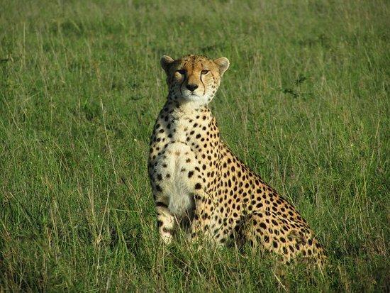 Essenia Safari Experts