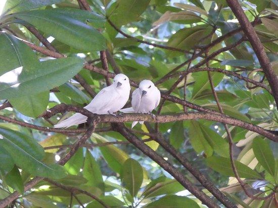 Vogelpärchen Naturreservat Cousin Island, Seychellen