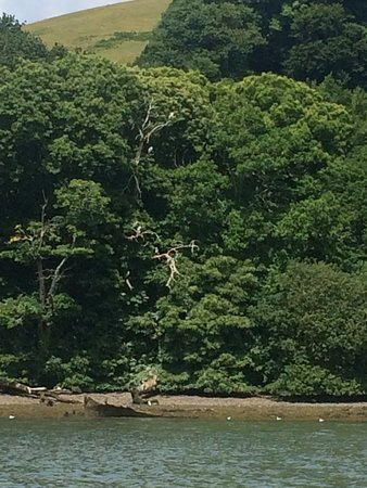 Herons in the old Oak Tree and a on wreck sits on the mud bank.
