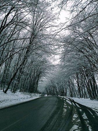 Qechresh forest