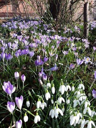 Hermannsburg, Allemagne : Frühling in unserem Garten