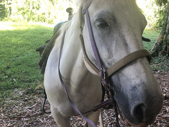 Outback Trails: Lovely horse Ashley!