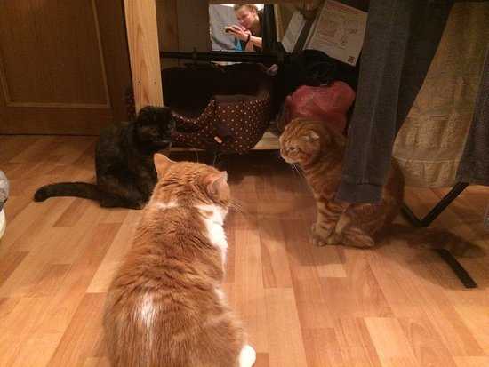 Мои котики. Ненавидят путешествовать из Москвы в Волжский