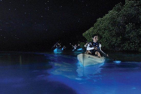 Night BioBay Kayak Tour from Vieques