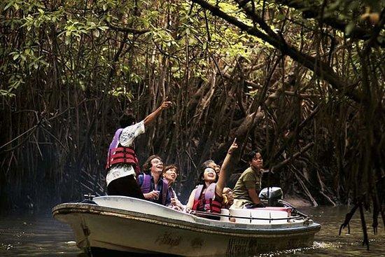 Tour della foresta delle mangrovie e