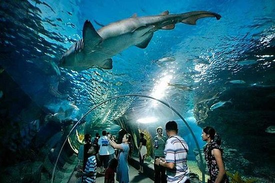SIAM SEA LIFE ENTRY AND 4D AND GLASS...