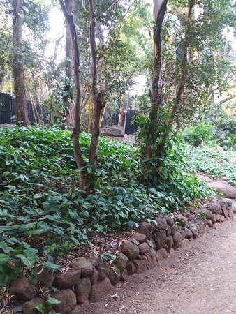 A lot of greenery and biodiversity