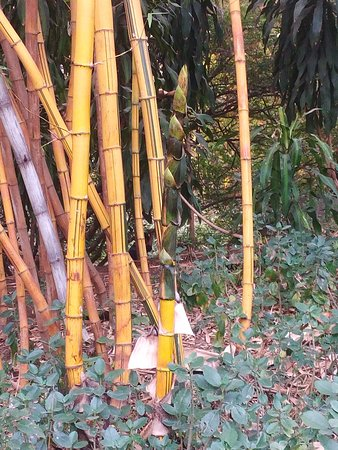 A young bamboo shoot