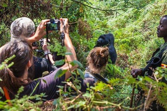 7天最好的乌干达大猩猩野生动物体验