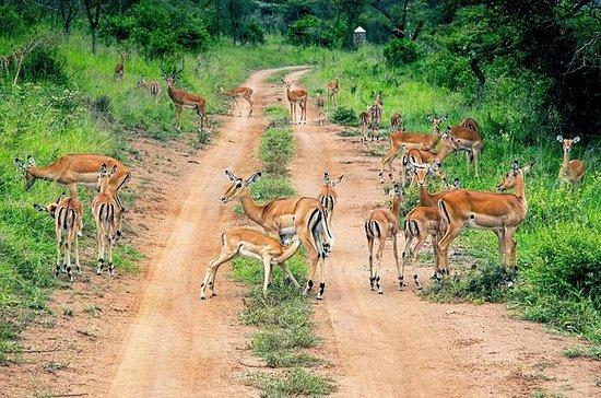 Excursion d'une journée en safari...