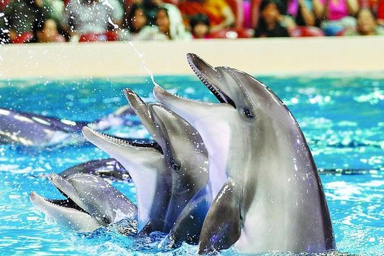 Dolphin and Seal Show-billetter med...