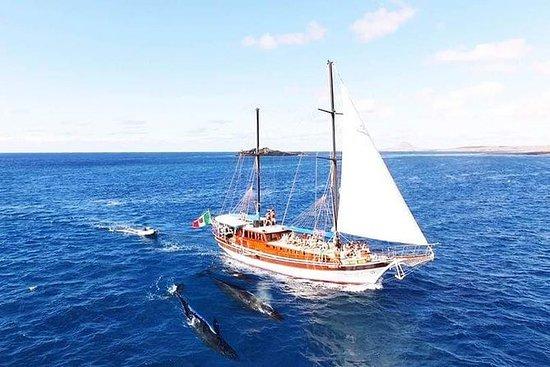 Guardando le balene di Gelidonya con