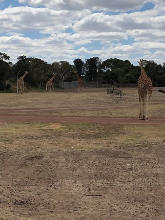 Werribee Open Range Zoo: UPDATED 2019 All You Need to Know ...
