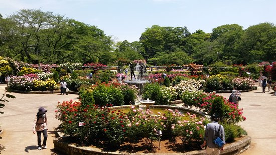 Satomi Park